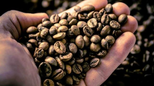 coffee species at risk of extinction